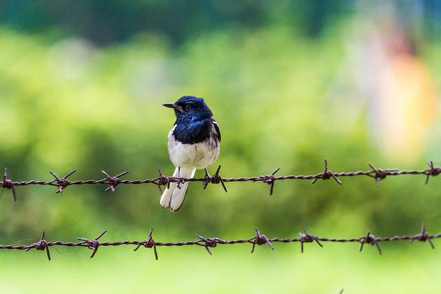 http://selfloud.net/birdwire.jpg
